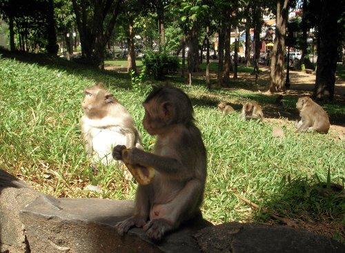Monkeys inside a temple, we fed them bananas
